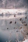 雪和冬天 乡下在冬天 免版税库存图片