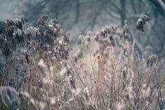 雪和冬天 村庄,乡下在冬天 免版税库存图片