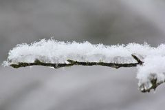 雪和冰川覆盖的分支 库存图片