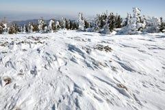 雪和冰川覆盖的树在山 免版税库存图片