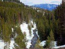 雪和冰川覆盖的河和林木线 免版税库存照片
