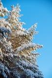 雪和天空美好的风景包括的冷杉 免版税库存照片
