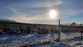 雪和太阳在篱芭之外 免版税库存照片