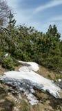 雪和太阳 免版税库存照片