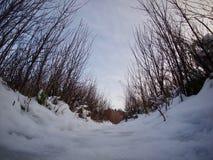 雪和树全景射击  库存照片