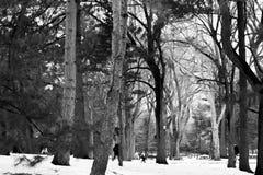 雪和树在中央公园 库存图片