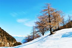 雪和树在瑞士阿尔卑斯 库存照片