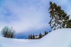雪和树,与多云蓝天 库存照片