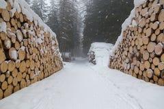 雪和森林 免版税库存照片