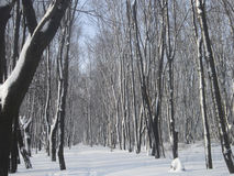 雪和灌木盖的树 库存照片