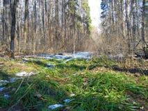 雪和草 免版税库存图片