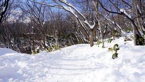 雪和走道在森林Noboribetsu onsen雪冬天同水准 库存照片