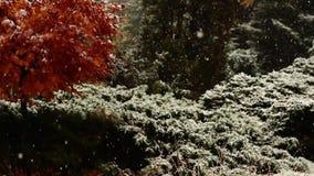 雪和雨在秋天公园 关闭结构树 下雪在森林沈默和自然 种植在雪的大农场主 股票录像