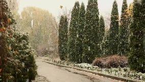 雪和雨在秋天公园 关闭结构树 下雪在森林沈默和自然 种植在雪的大农场主 股票视频
