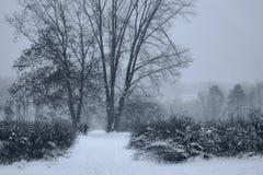 雪和雾在草甸 库存图片