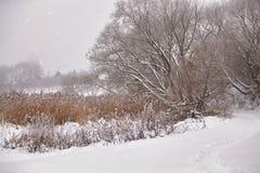 雪和霜在藤茎在一条冻河 阴暗多雪的天气 免版税库存照片