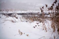 雪和霜在藤茎在一条冻河 阴暗多雪的天气 免版税图库摄影