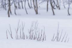 雪和霜在Beitostøle盖了在一个白色风景的树 免版税库存照片