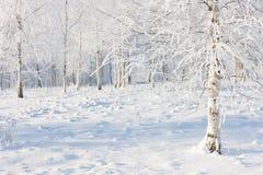 雪和霜的桦树森林 库存图片