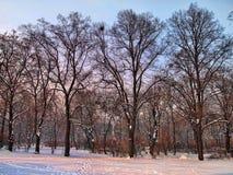 雪和晴天在公园 免版税库存图片