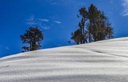 雪和结构树 库存照片