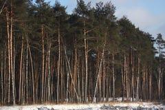 雪和结构树 免版税库存照片