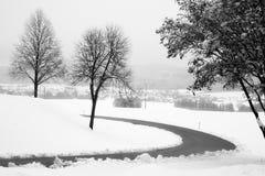 雪和结构树 免版税图库摄影