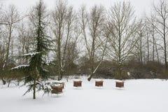 雪和养蜂业 免版税图库摄影
