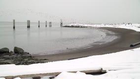 雪和snowgeese garry点4K UHD 股票录像