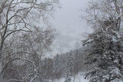 雪国家 免版税库存图片