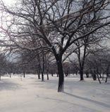 雪圣诞节在公园 库存照片