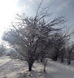 雪圣诞节在公园 免版税库存图片