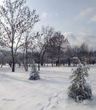 雪圣诞节在公园 免版税库存照片