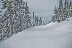 滑雪在不列颠哥伦比亚省 库存图片
