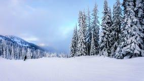 滑雪在与积雪的树的一个冬天风景在太阳附近村庄的滑雪小山锐化 免版税库存图片