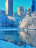 雪在中央公园纽约 库存图片