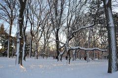 雪在中央公园 库存照片