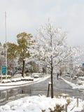 雪在京都 免版税图库摄影