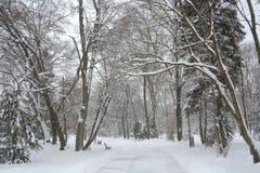 雪在公园在索非亚,保加利亚2014年12月29日 图库摄影