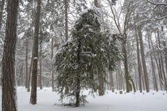 雪在公园在索非亚,保加利亚2014年12月29日 免版税图库摄影