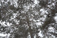 雪在公园在索非亚, 2014年12月29日 免版税库存图片