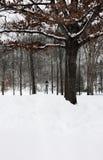 雪在公园 库存照片