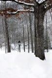 雪在公园 库存图片