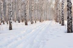 滑雪在冬天树丛里 免版税库存照片