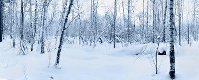 雪在冬天森林里。 免版税库存图片