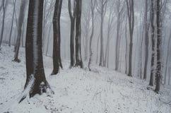 雪在冬天森林里 免版税库存照片