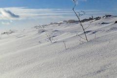 雪在冬天 图库摄影