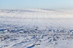 雪在冬天 免版税库存照片
