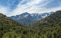 雪在可西嘉岛加盖了山和杉木森林 免版税库存照片
