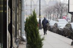 雪在城市 库存照片